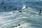 Everybodys gone surfing...