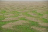 Mekong Mud