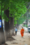 Monk and Trees in Vientiane