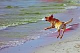 Perfect Catch