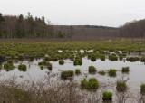 Swamp at Wawayanda State Park on the Cherry Ridge Road Trail