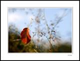 Fallen Leaf 4