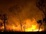 Woodland Fire