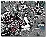 Snow cones.jpg