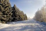 Along the Spruce
