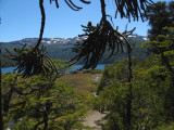 Le lac de Conguillío (1100m.)