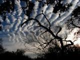 twisted tree1204.JPG