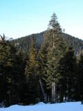 Grouse Mountain Trees 2.jpg