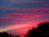 Rose Before the Dawn.jpg