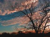 Evening Clouds 2.jpg