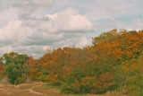 Fall Color 2006.jpg