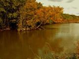 Fall Along Salado Creek 2.jpg