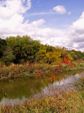 Salado Creek in Fall.jpg