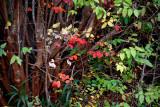 Winter Garden Colors.jpg
