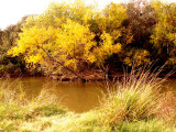 Fall Along Salado Creek 3.jpg