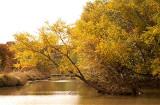 Fall Along Salado Creek 5.jpg