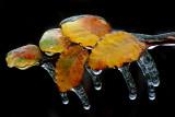 1-2007 Ice Storm 6.jpg