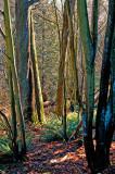 Stanley Park Ferns.jpg