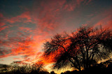 2-2-2007 Sunset 4.jpg
