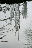 Branches of Ice 1-17-2007.jpg