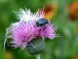 Texas Wildflowers in the Sun 1.jpg