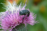 Texas Wildflowers in the Sun 2.jpg