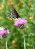 Texas Wildflowers in the Sun 4.jpg