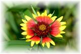 Texas Wildflowers in the Sun  7.jpg