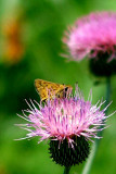 Texas Wildflowers in the Sun  12.jpg