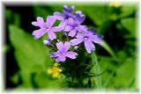 Texas Wildflowers in the Sun  13.jpg