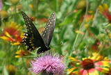 Texas Wildflowers in the Sun  14.jpg