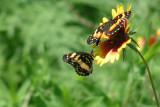 Texas Wildflowers in the Sun  15.jpg