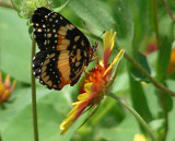Texas Wildflowers in the Sun  16.jpg