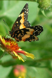 Texas Wildflowers in the Sun  17.jpg