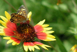 Texas Wildflowers in the Sun  18.jpg