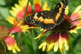 Texas Wildflowers in the Sun  19.jpg