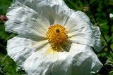Texas Wildflowers in the Sun  20.jpg
