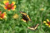 Texas Wildflowers in the Sun  22.jpg