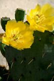 Cactus Flower 6.jpg