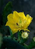 Cactus Flower 7.jpg