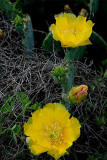 Cactus Flower 8.jpg