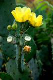 Cactus Flower   10.jpg