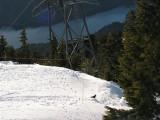 Resident Crow on Grouse Mountain.jpg