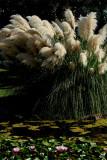 Pampas Grass and Water Lilies.jpg