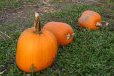pumpkin patch *all galleries*