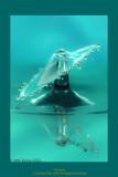 BlueIMG19168.jpg