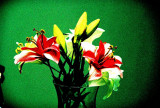 Fake bloom, artificial colours