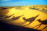 Dunes & Camels