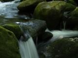 Elkmont Stream #4