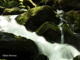 Mountain Stream at Tremont